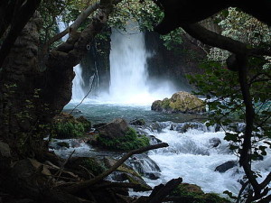 We will hike in the Golan Heights to the Banias, pictured here, and we will visit the Hula Valley, the stopping point for birds migrating between 3 continents.
