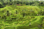 Rice terraces in Bali, a perfect metaphor for the layers of a life well-lived