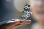Butterfly-on-Hand-000054283042_Large