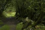 Hiking-Path-in-Wales-000075847317_Medium