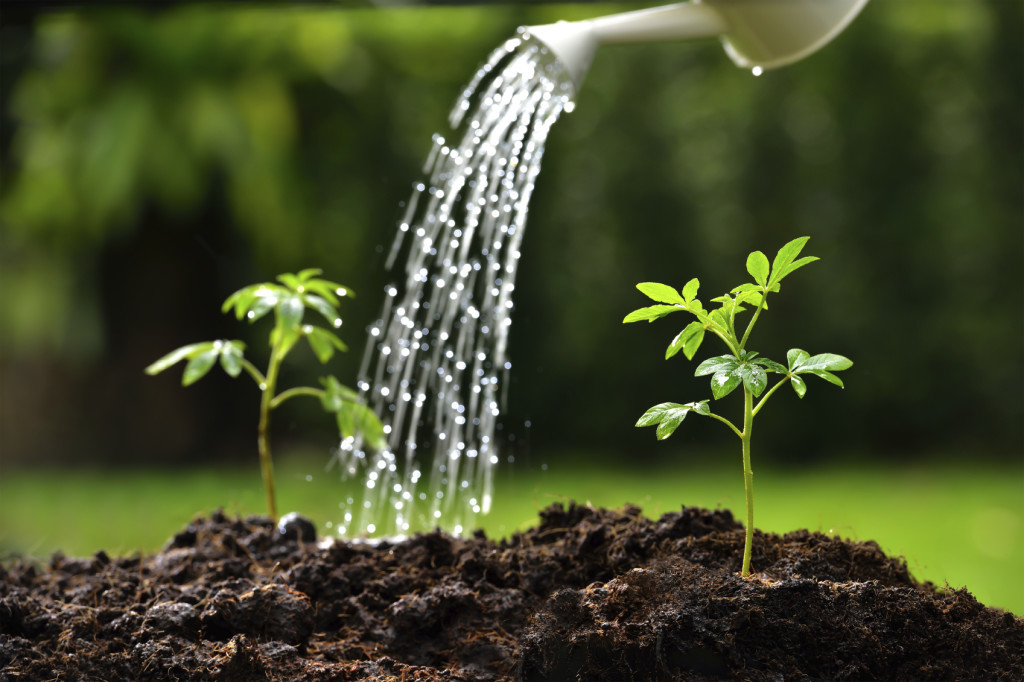 Young-plants-000081135455_Medium