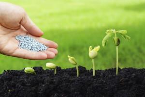 growing-plant-000056349508_Medium